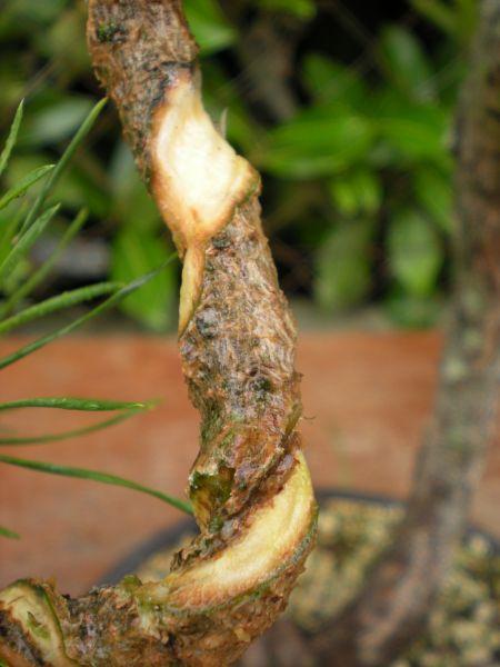 bonsaetligaturesaot201022116.jpg