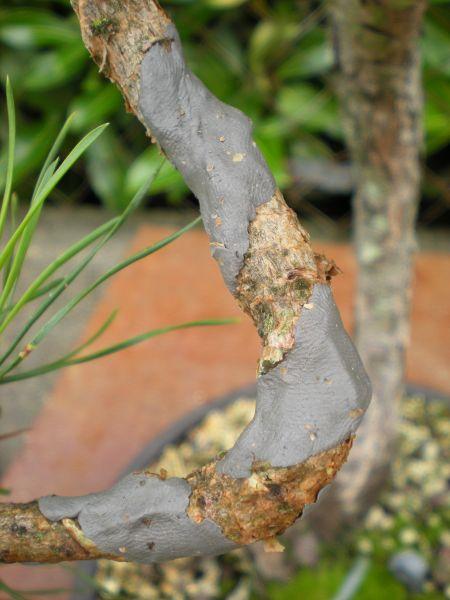 bonsaetligaturesaot201022117.jpg