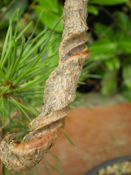 bonsaetligaturesaot20102216.jpg