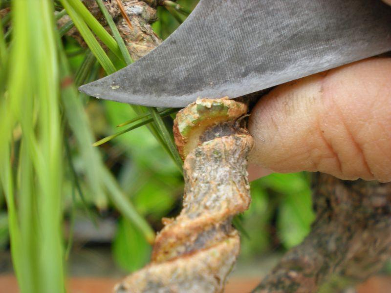 bonsaetligaturesaot20102219.jpg