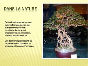 Diapositive3