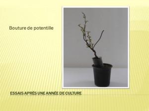 Diapositive46