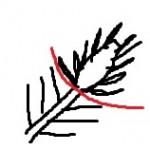 1-Taille chandelle