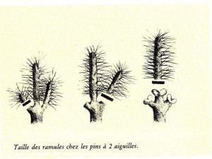 taille chandelles 1