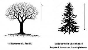 1-architecture de l'arbre