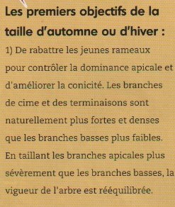 1-taille automne